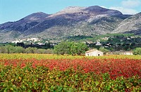 Vineyard at Jalon Valley