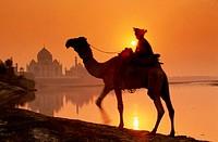 Person Riding Camel Near Taj Mahal, Agra, India