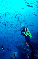 Diver with Dark Banded Fusiliers -- Maldives