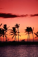Palm trees on shore during sunset, Waikoloa, Hawaii, USA