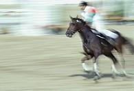 Equestrian event, Seoul Olympics