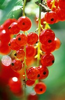 Aliment, Aliments, Berries, Berry, Bunch, Bunches, Close_up, Color, Colour, Country, Countryside, Currant, Currants, D