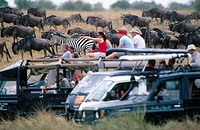 Tourists. Masai Mara Game Reserve. Kenya