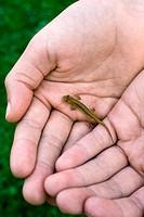 Girl taking care of tiny Lizard
