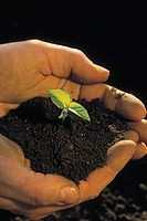 PERSON HOLDING PLANT SEEDLING