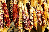 Closeup of colorful Indian corn in shop in Cherokee, North Carolina
