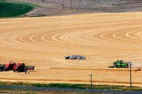 Custom harvest crew with combines in wheat field, Cheyenne, WY