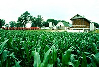 Corn fields and farm buildings of Niel Henry, Clinton city, OH