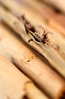 Cinnamon sticks (Cinnamomum zeylanicum). Cinnamon is the dried inner bark of any of the trees in the genus Cinnamomum. It is an aromatic spice and is ...