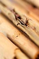 Cinnamon sticks (Cinnamomum zeylanicum). Cinnamon is the dried inner bark of any of the trees in the genus Cinnamomum. It is an aromatic spice and is ...