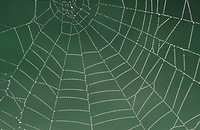 spiders web, close_up