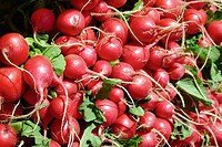 Union Square farmer's market redishes