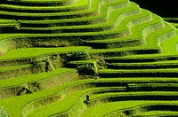 Rice terrace. Mouth of the Tiger. Scenic area. Yuanyang. China