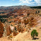 Bryce Canyon. Utah. USA