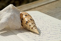 Coral and snail-shell lying on an open diary