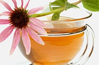 Purple Coneflower (Echinacea purpurea) infusion
