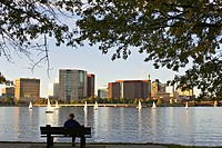 Massachusetts, Boston, Group of sailboats on Charles River Basin between Cambridge and city, skyline, man sit on bench under trees