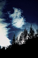 Silhouette of trees, Yosemite National Park, Mariposa County, California, USA