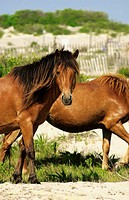 Two horses, close-up
