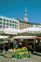Flower stand in a market, Viktualienmarkt and the Old City Hall, Munich, Germany