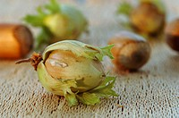 Hazelnuts, close-up