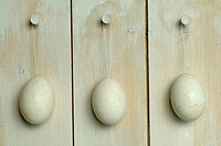 Easter eggs hanging from wall