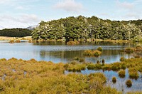 New Zealand. South Island. Mavora Lakes Park, Te Wahipounamu/South , West New Zealand World Heritage Area, tussock grasslands, pine trees. Film locati...