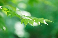 nature and green leaves