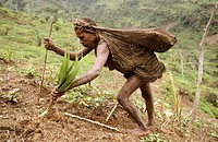 Yalis woman at field-work, Western Papuasia, Former Irian-Jaya, Indonesia