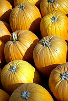 Pumpkins at Russell Orchards in Ipswich, Massachusetts. USA