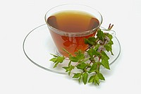 Peppermint (Mentha piperita) tea