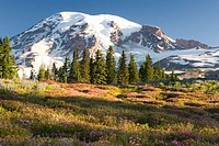 USA, Washington, Mt. Rainier National Park, field with wildflowers