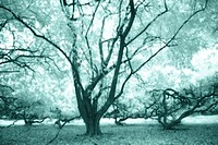 Singapore, Trees [Infrared manipulated], green, soft