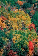 Canada, forest during Indian summer