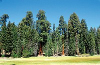 Etats-Unis, Californie, Sequoia National Park