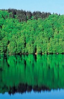 France, Auvergne, forest at Pavin lake