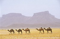 Yemen, Ramlat As Sab'atayn desert