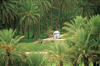 Yemen, Wadi Do'an, palm grove near Khureiba