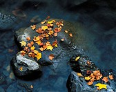 China, Fallen leaves and brook