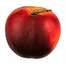 Nectarine