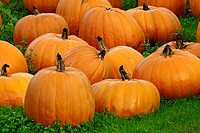 Pumpkins. California, USA