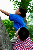 Boys climbing up a tree