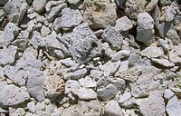 Fragments-of-bleached-fossil-coral-on-coral-cay.-/nGreat-Barrier-Reef,-Australia