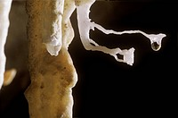 Calcite-Cave-formation/nsmall-helictite-w/-water-droplet---Belize-C.-America