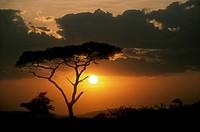 Serengeti-Sunset,-Tanzania