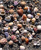 environment, nature, coast, beach, seashells, shells, seashore, shell, object, still life,