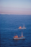Fishing Trawlers Compete for Fish w/ Seals, Namib Desert Coast, Namibia, SW Africa
