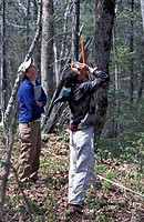 Kibby Township, ME. Field researchers for Manomet Observatory measuring canopy height on a tract of Maine timberland. Late successional northern hardw...