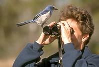 Fla.-Scrub-Jay-&-Birder-(Aphelocomoa-coerulescens)-FL