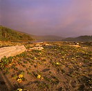 Driftwood--and-Wildflowers-on-Beach,-Patrick´s-Point-S.P.,-CA